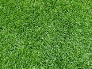 Werder Bremen Rasen