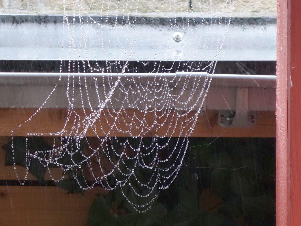 Spinnennetz im Regen
