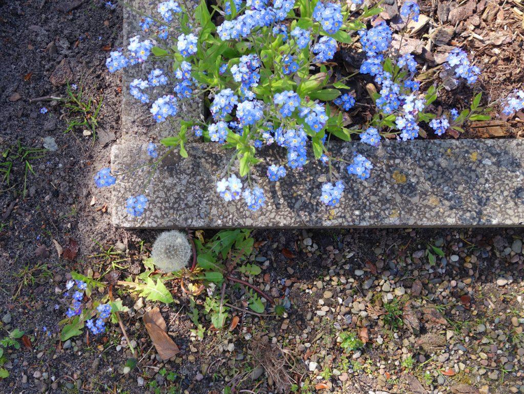 Blumen unten