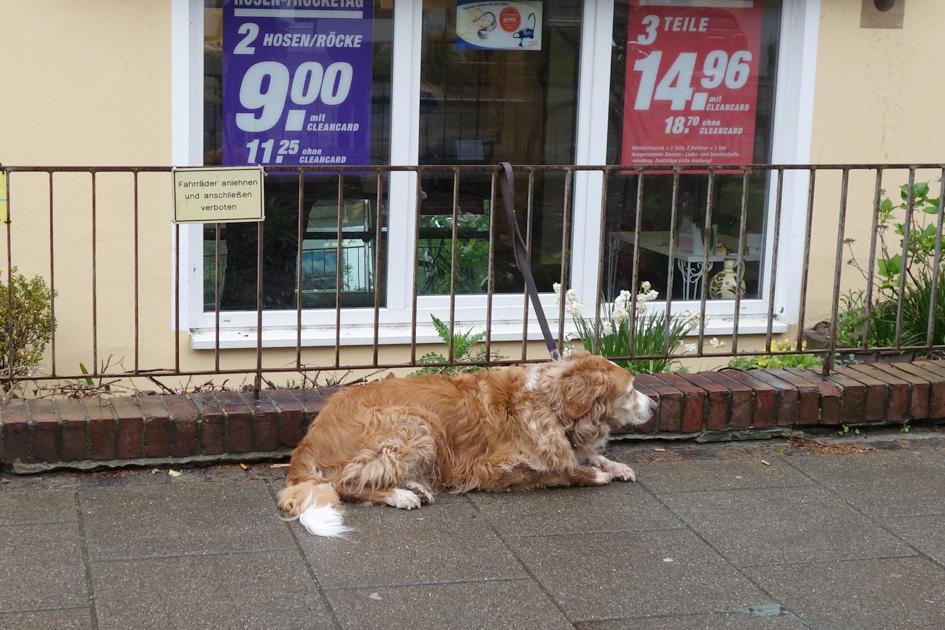Hund wartet im Regen