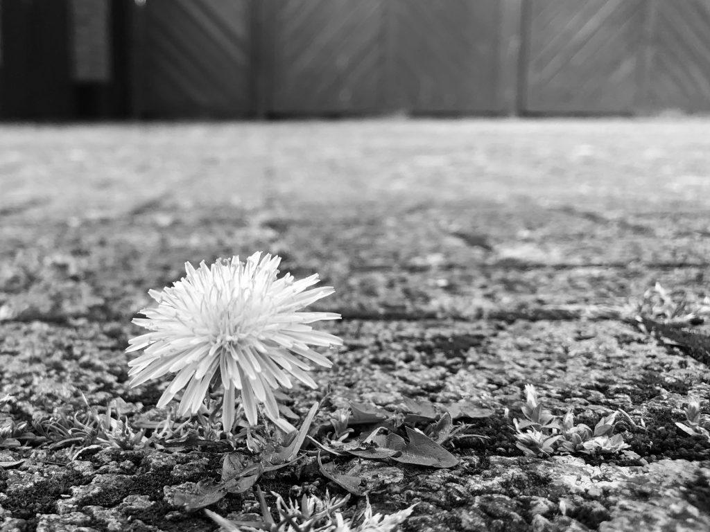 Bilder in schwarz-weiß