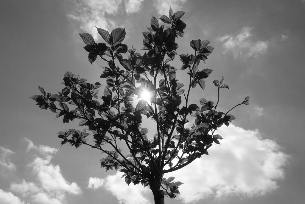 Baum Sonne Himmel