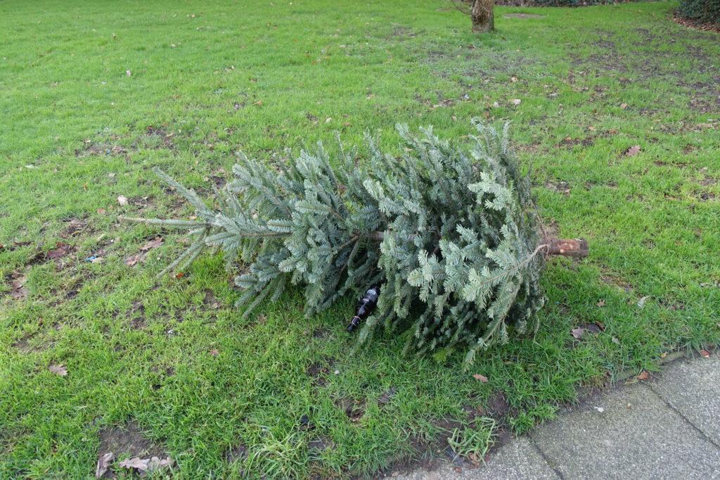 Weihnachtsbaum Bremen